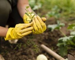 Las 3 tareas clave para cuidar de tu jardín esta primavera