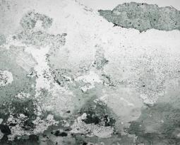 ¿Necesitas ayuda con la pintura de las paredes de tu casa?